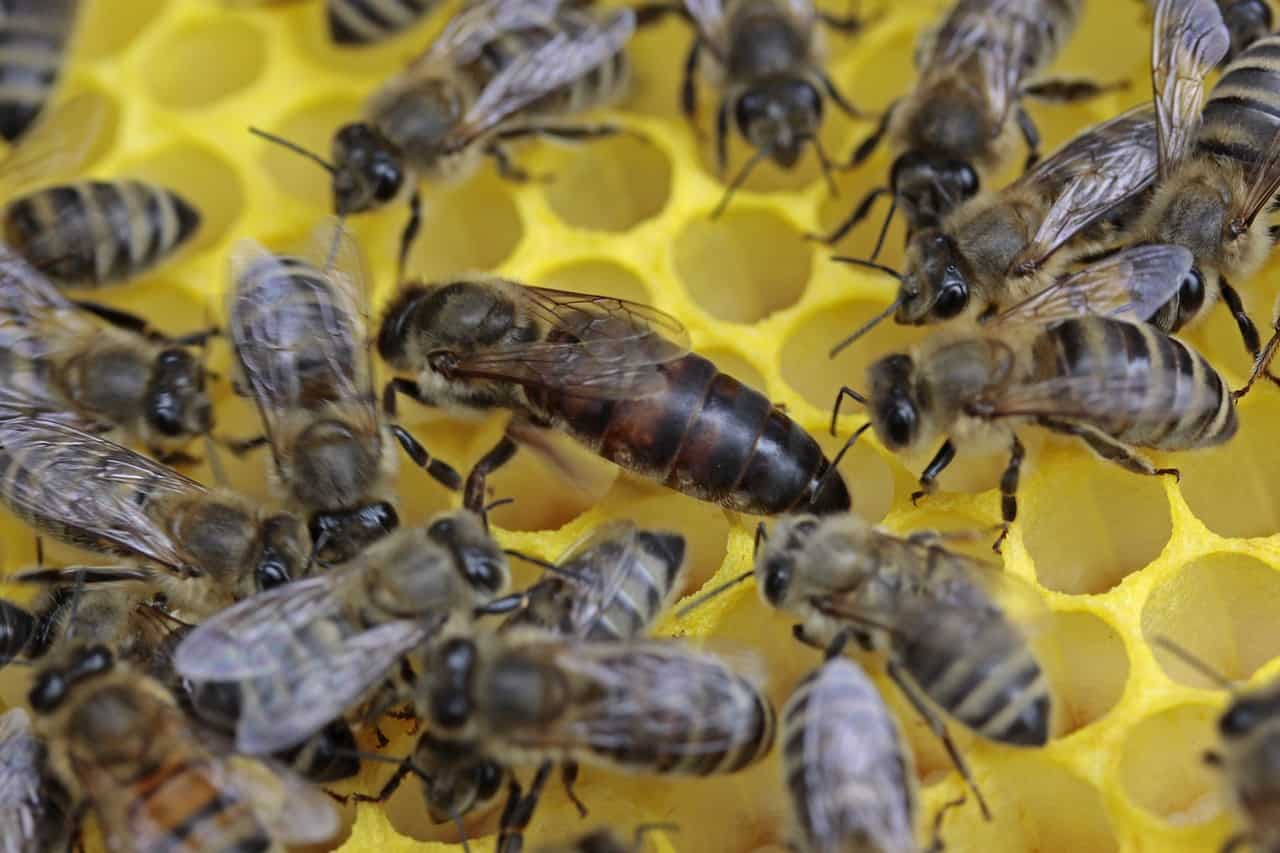 Queen Bee with Workers